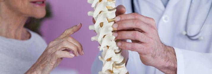Chiropractic Wilmington DE Spine Model